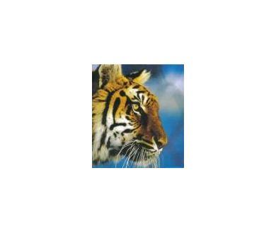 GB : National Geographic s'aventure avec Sky en haute définition !